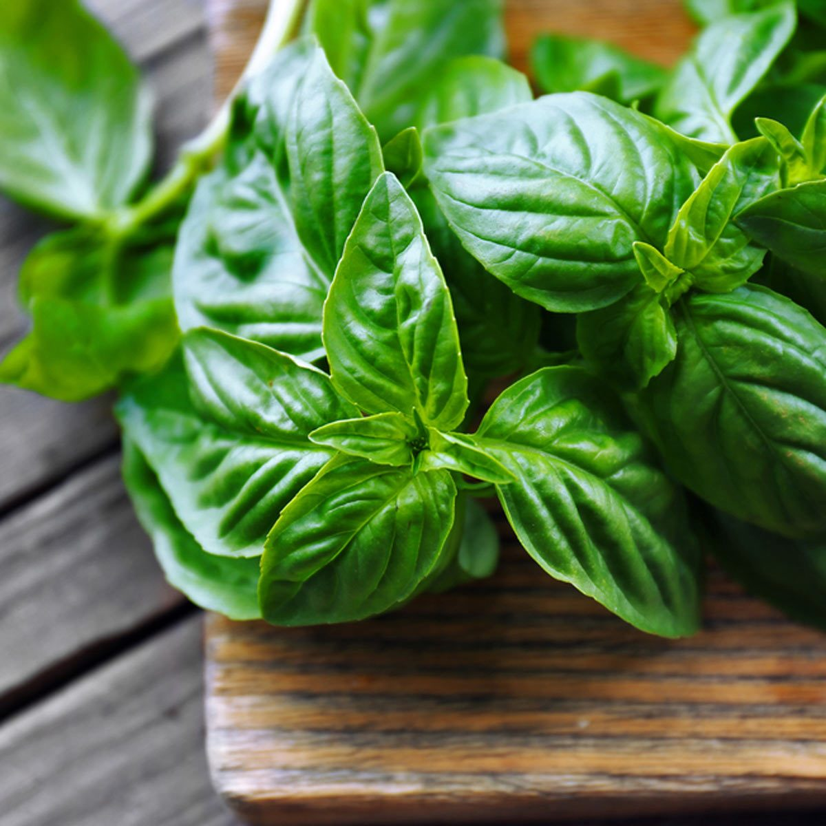 10 Things You Dont Have To Refrigerate Family Handyman The Basil Top Rust