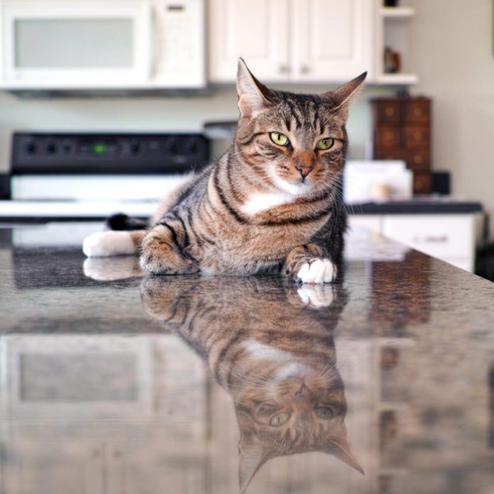 How to Keep Your Cat Off the Counter: Top 10 Ways