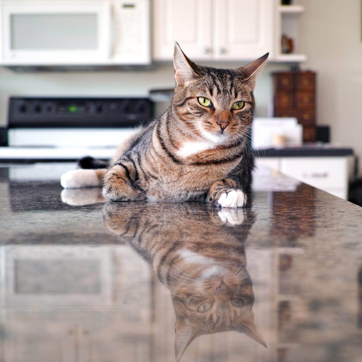 Top 10 Diy Ways To Keep A Cat Off The Kitchen Countertop