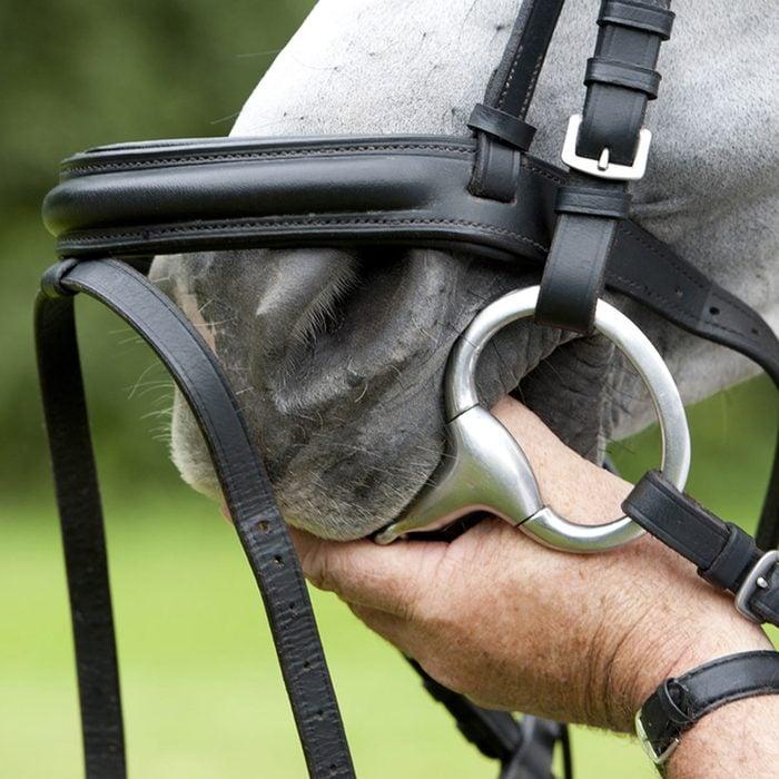 Clean a Dirty Horse Bit
