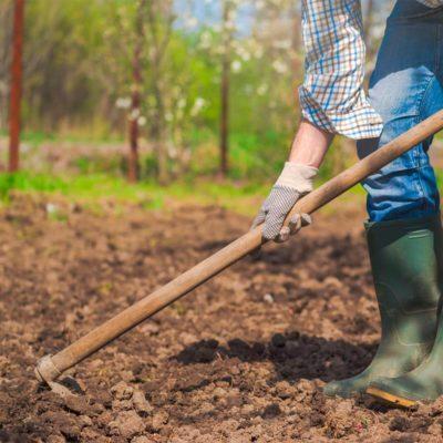 tending to vegetable garden how to prepare soil for garden