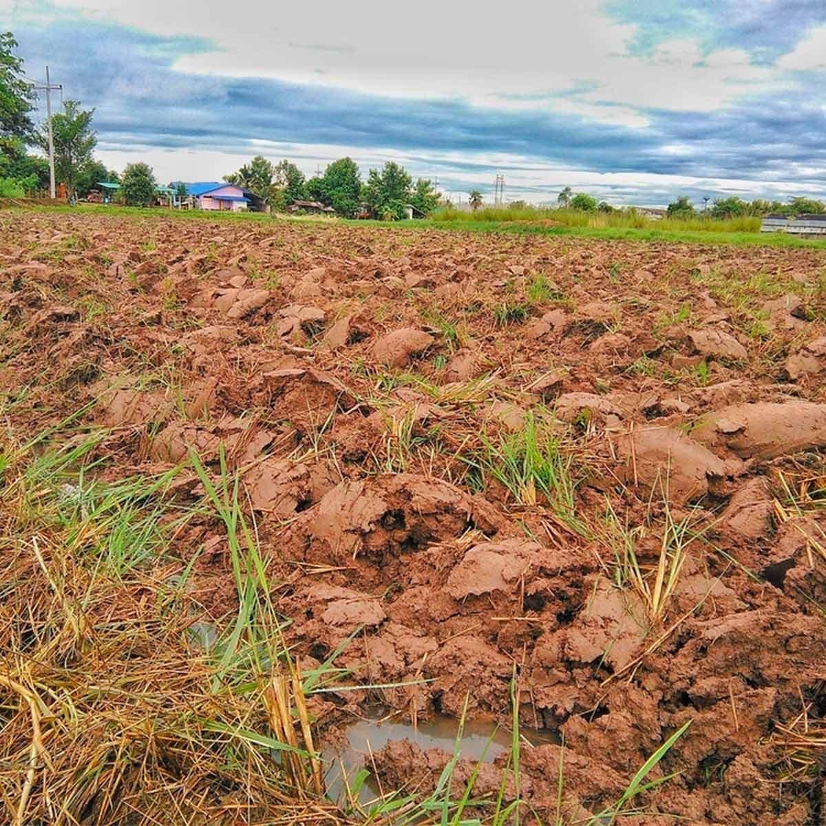 clay soil - Vegetable Garden Soil