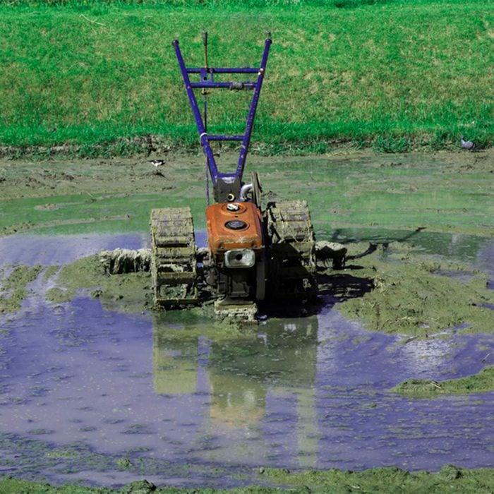 swampy land