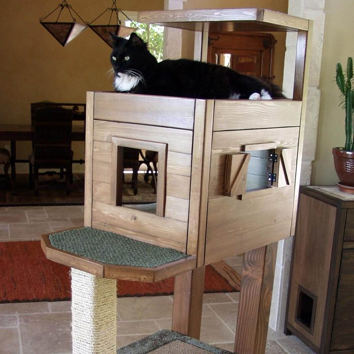 Cat Condo With High-Level Cabin