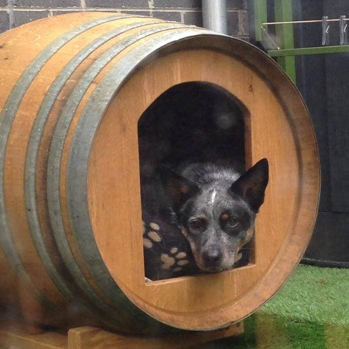 Barrel Dog Bed