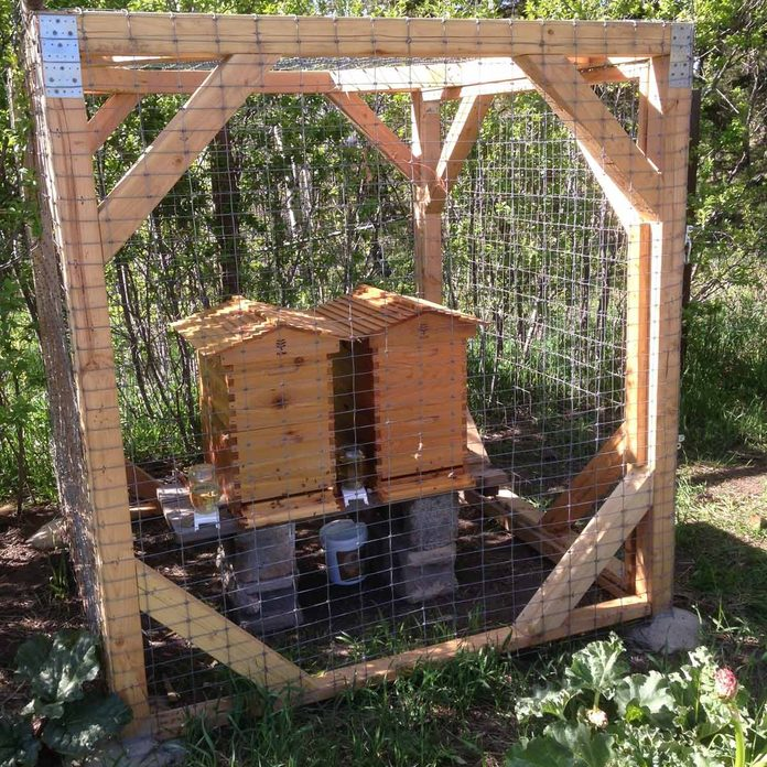 Beehive Protection Fence
