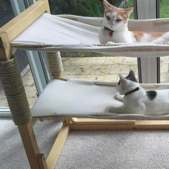 diy cat furniture cat hammock