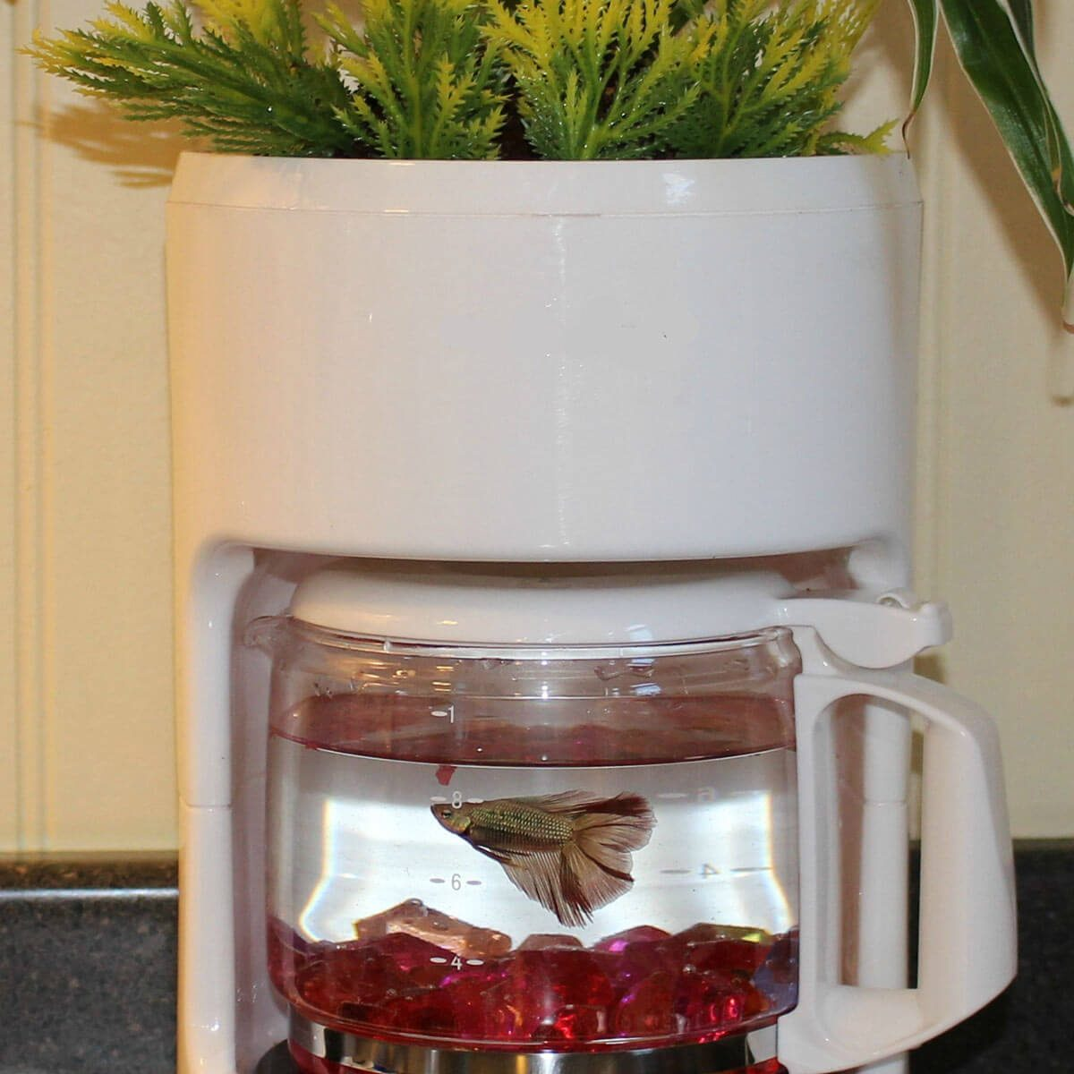 Dual-Purpose Coffee Pot fish tank diy planters