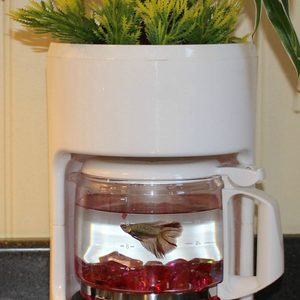Dual-Purpose Coffee Pot fish tank diy planters