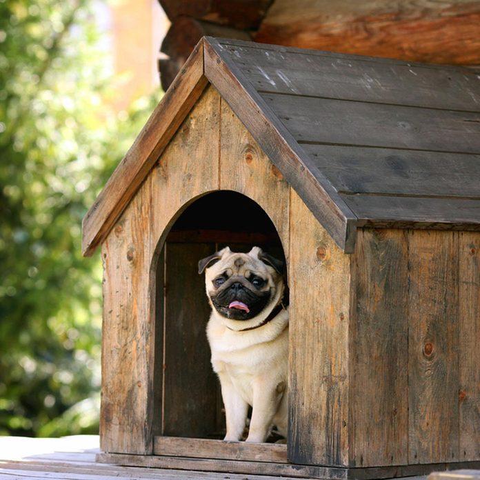 Pug Dog House