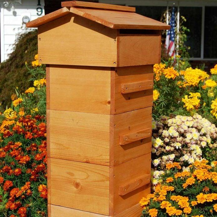 backyard beekeeping Standing beehive