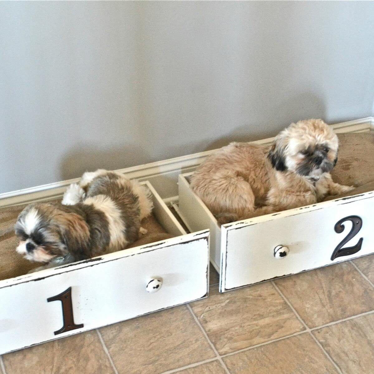 Charming Diy Dog Bed Part - 13: Drawer Dog Beds