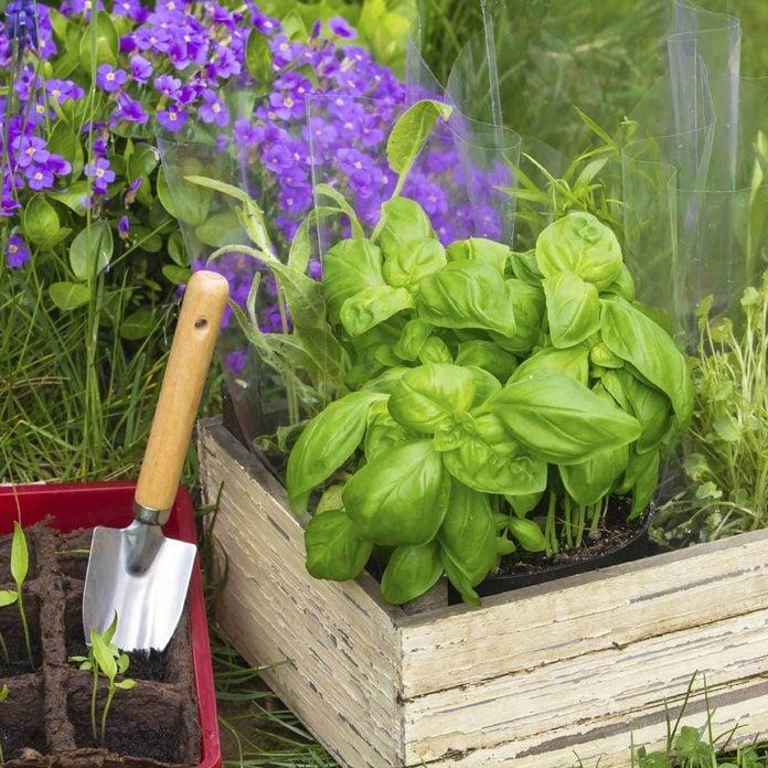 cabinet drawer flower planter