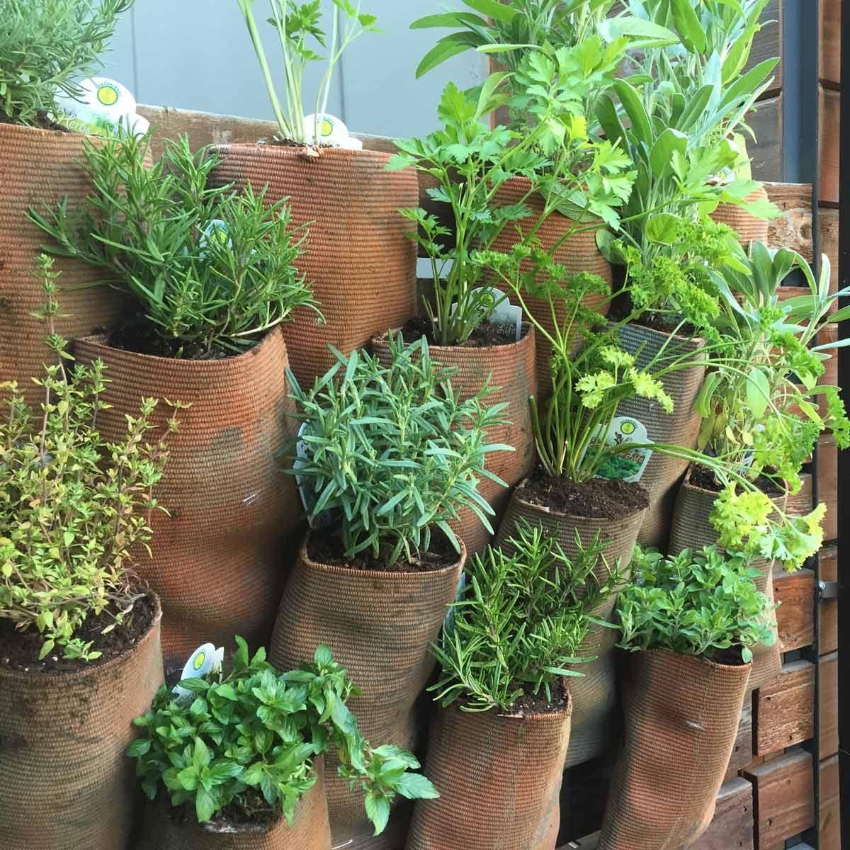 Fire Hose plant Wall