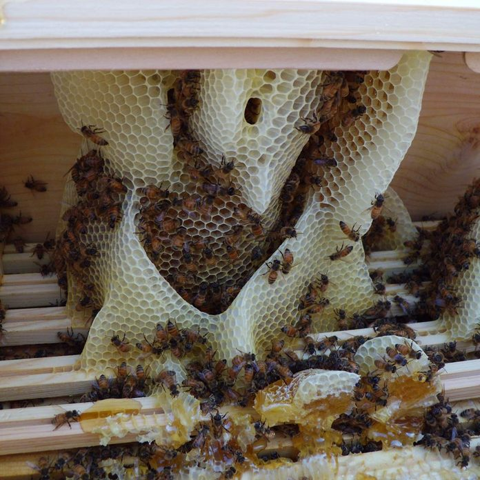 Lack of Frames beehive