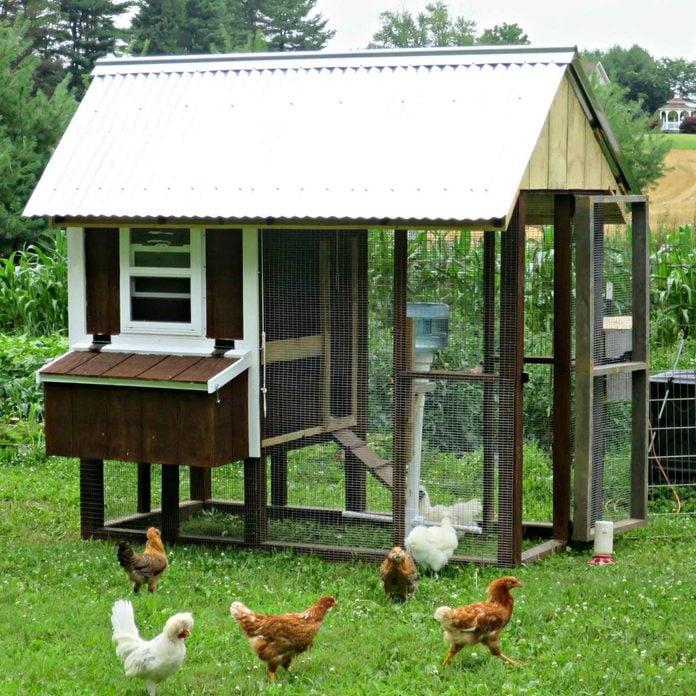 linoleum floor chicken coop