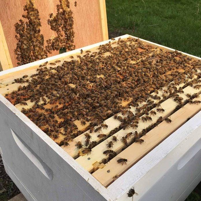 Raised Bee Hives