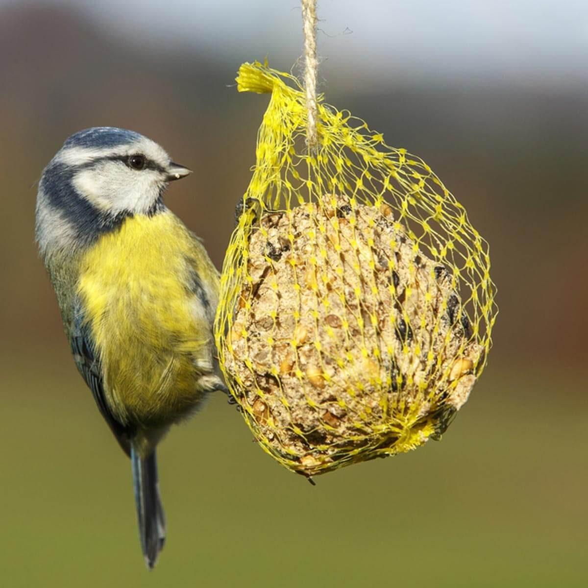 Simple winter bird feeders