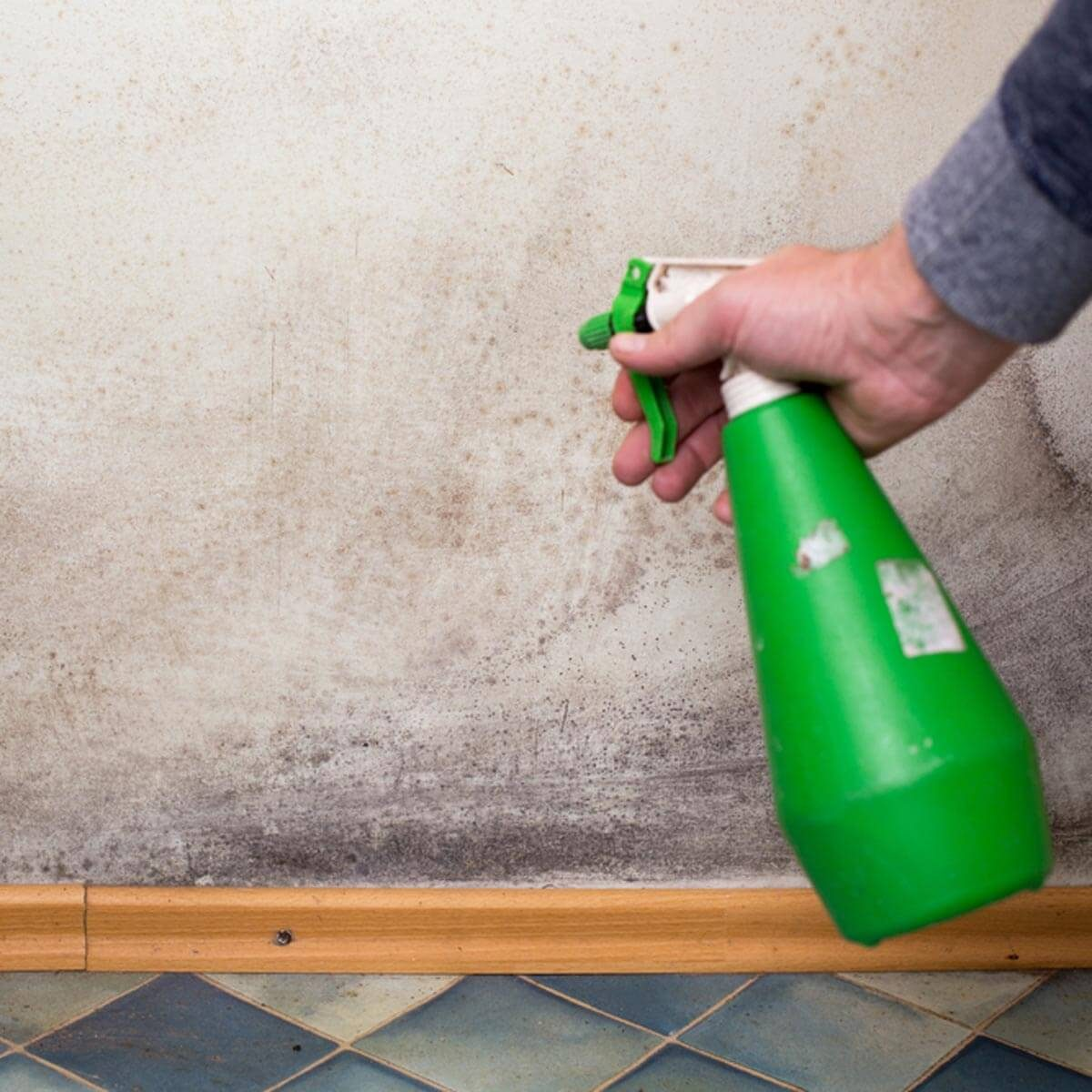 Get rid of Mold and Mildew