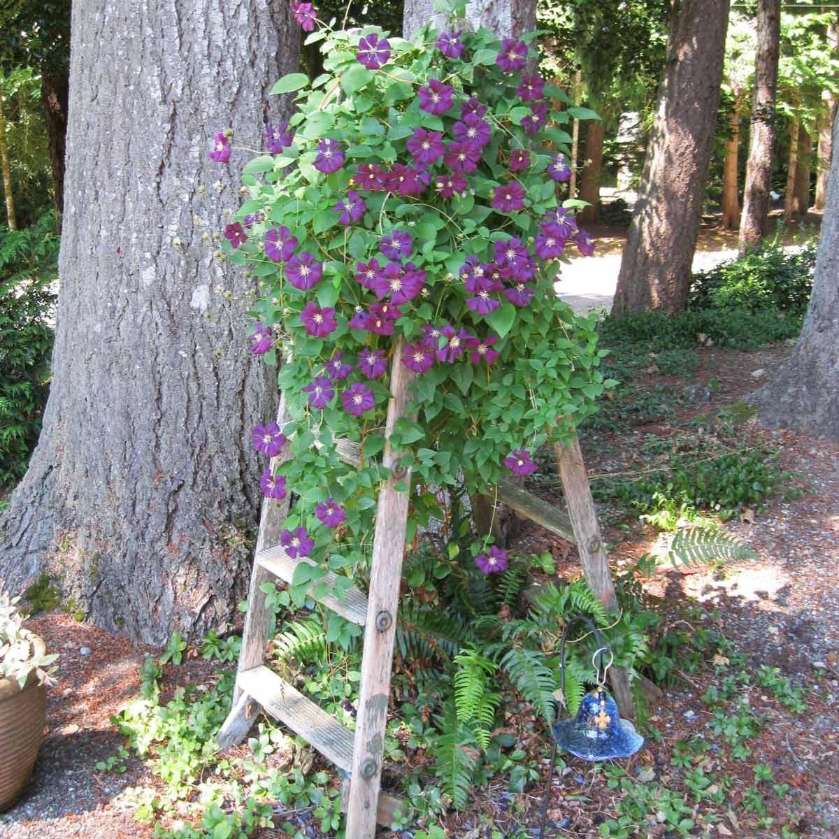 step ladder flower tower