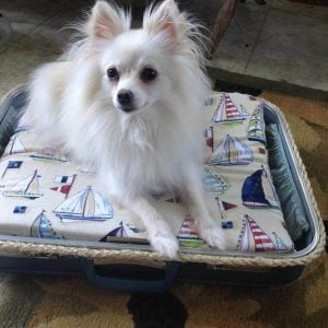 14 Adorable DIY Dog Beds