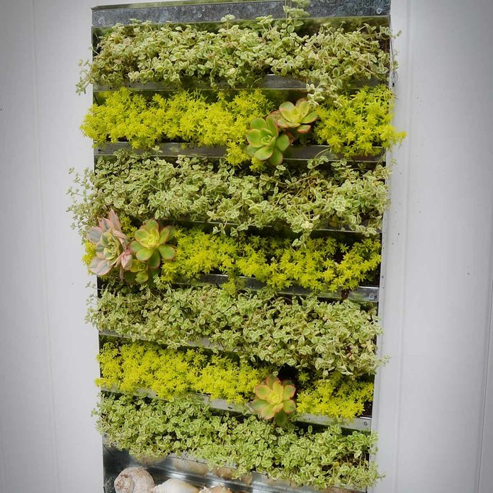 plant wall from vent