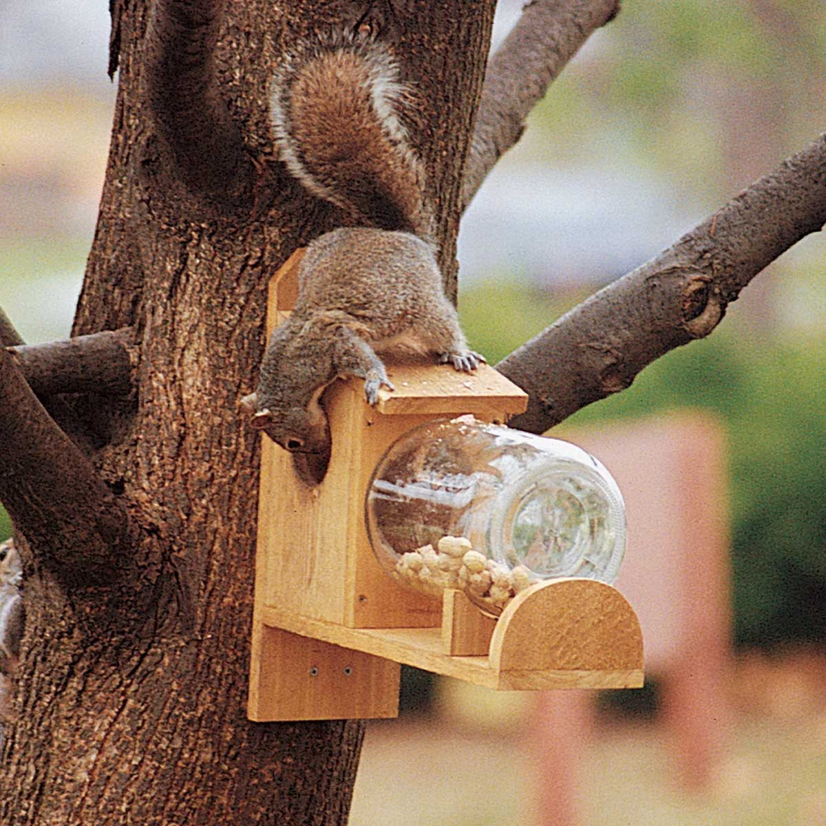 entertaining-squirrel-feeder-outside