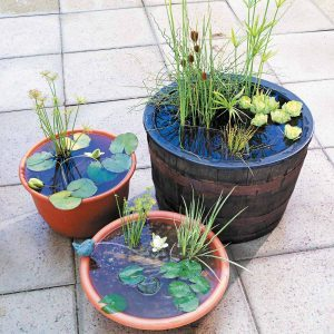 Pint-Sized Water Gardens
