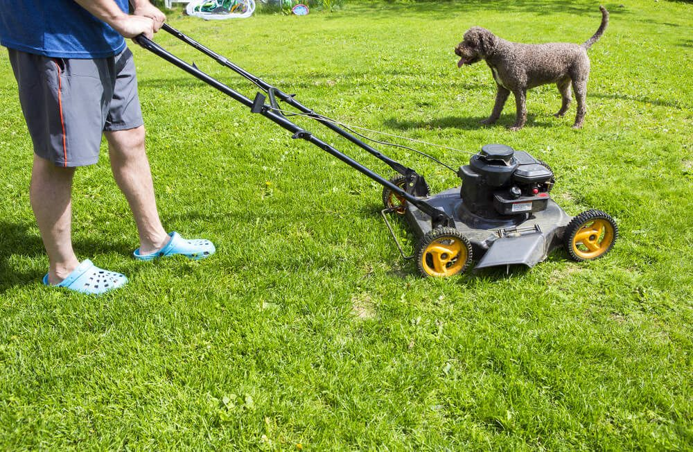 Why You Should Pick Up Dog Poo Before Mowing Your Lawn