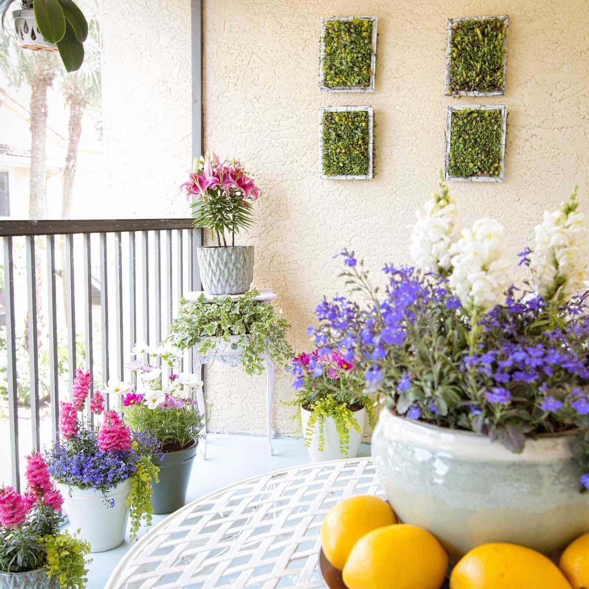 Container Plants Colorful Annuals Brighten An Outdoor Living E