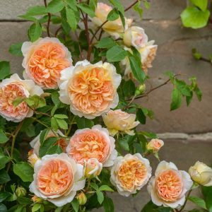 Roses: They're Not Your Grandmother's Needy Garden Plants Anymore