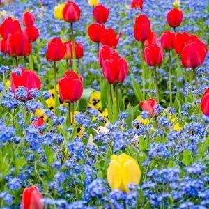 12 Inspiring Garden Flower Bed Designs