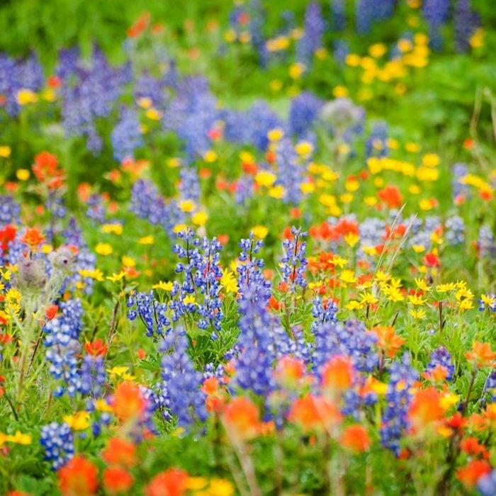 wild flowers garden