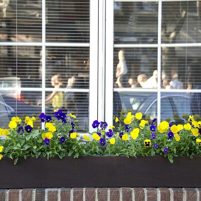 flowers in window boxes
