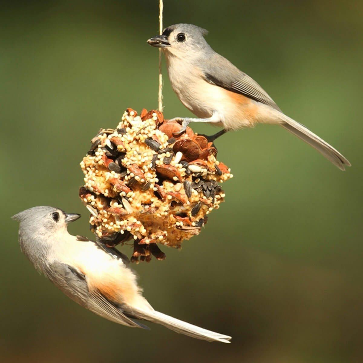 peanut butter diy bird feeder