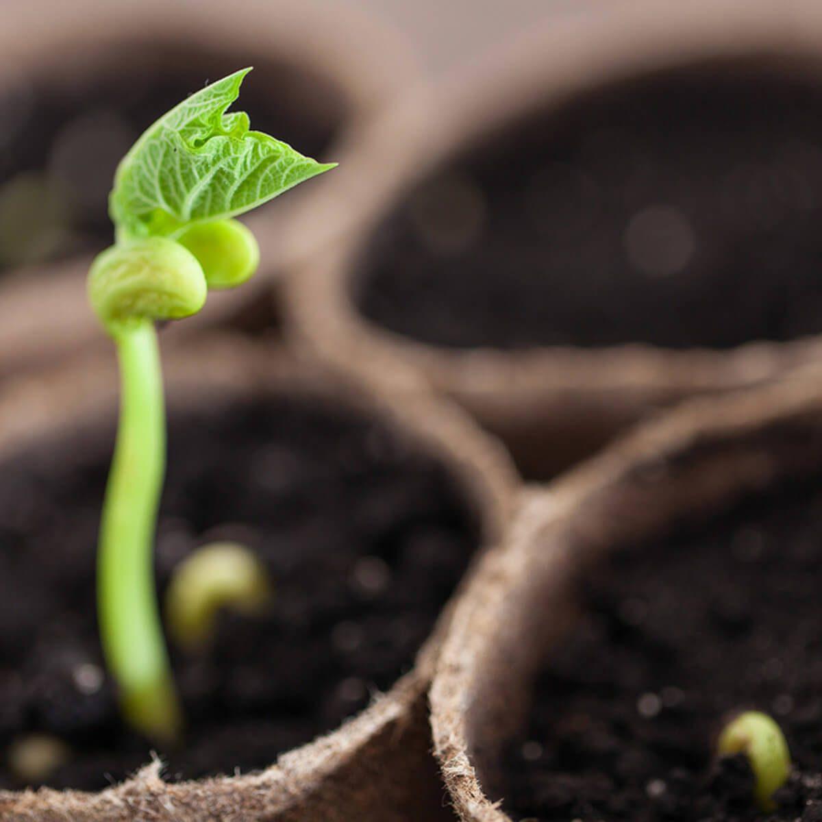 Start Seeds gardening
