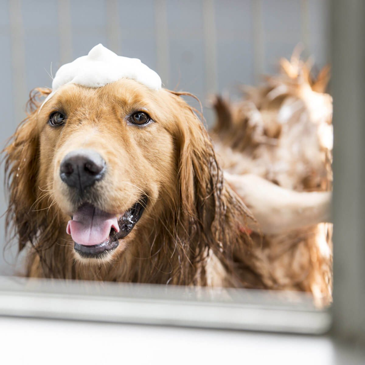 give your dog a bath life hacks