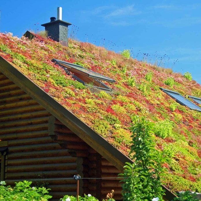green roofing plants on roof