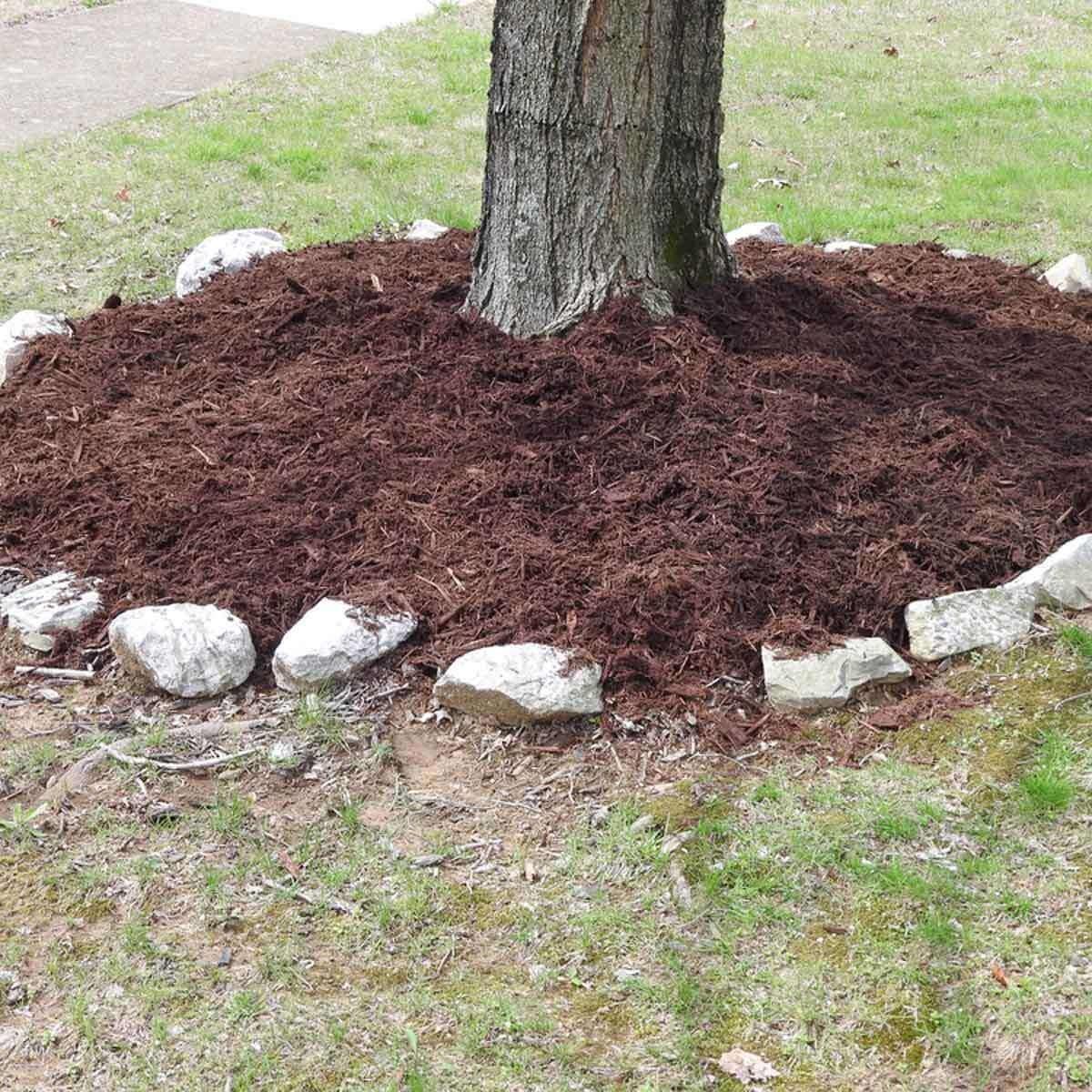 mulch around tree