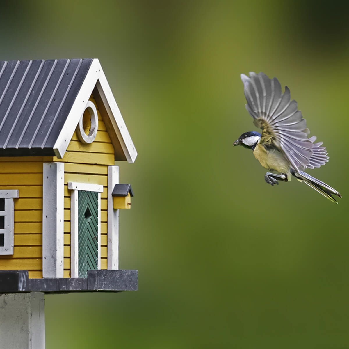 birdhouse flying bird