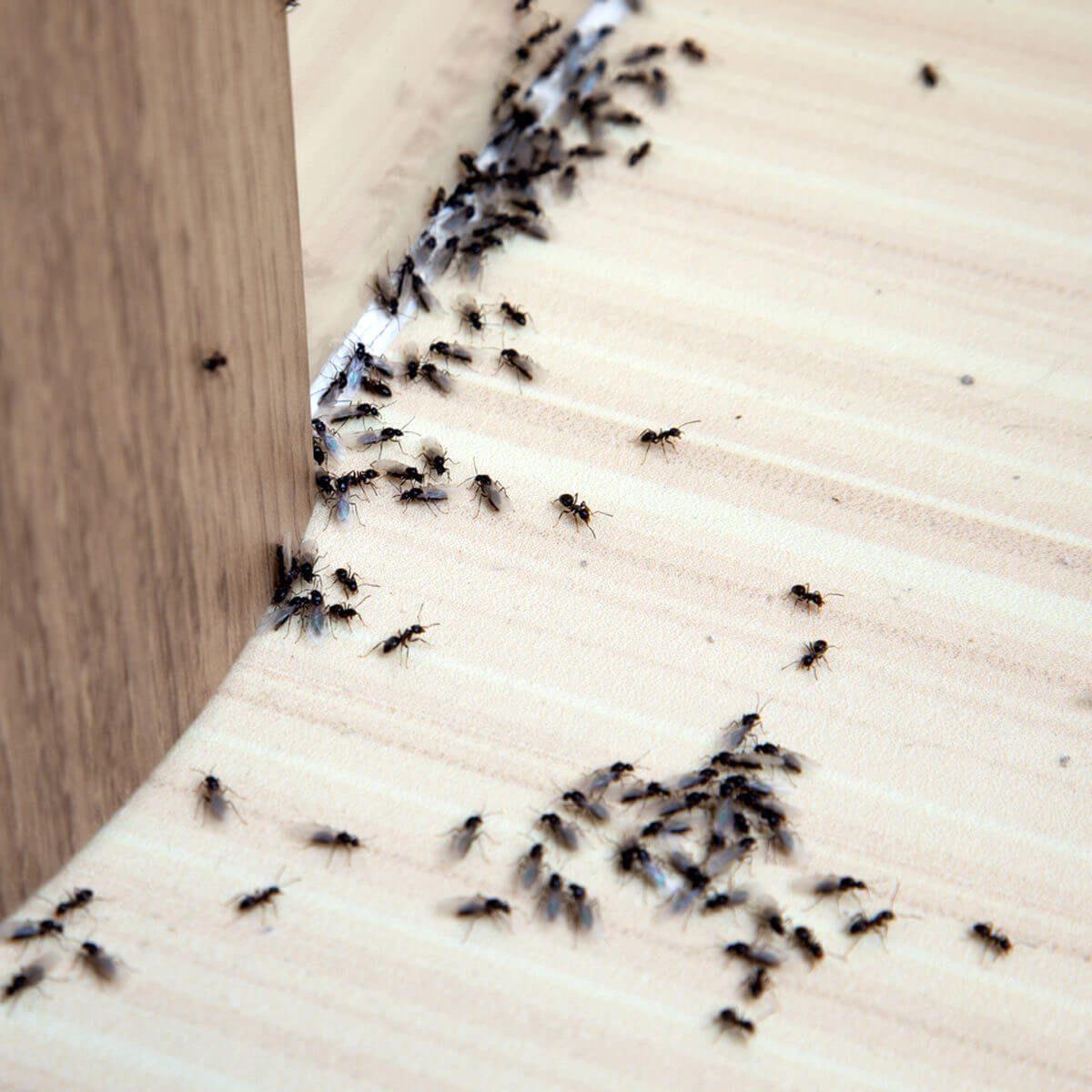 ants inside