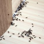 10 Best Home Remedies to Get Rid of Ants (Plus One To Stop Using)