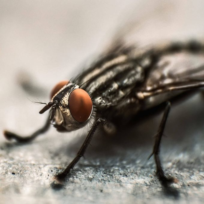 fly in compost pile