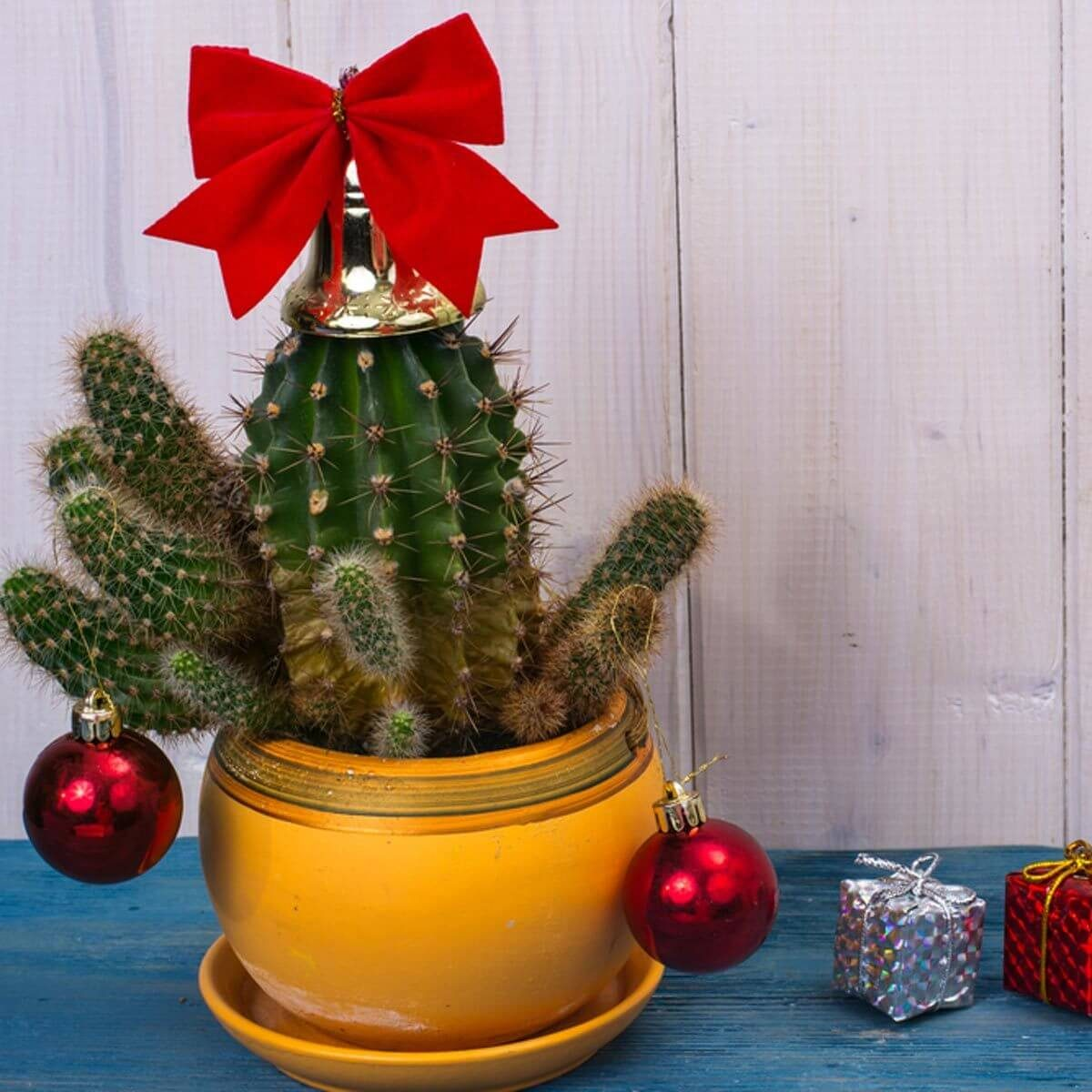 14 Ways To Decorate Your Home With Cactus