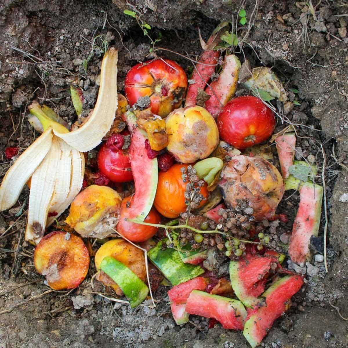 food scraps in compost