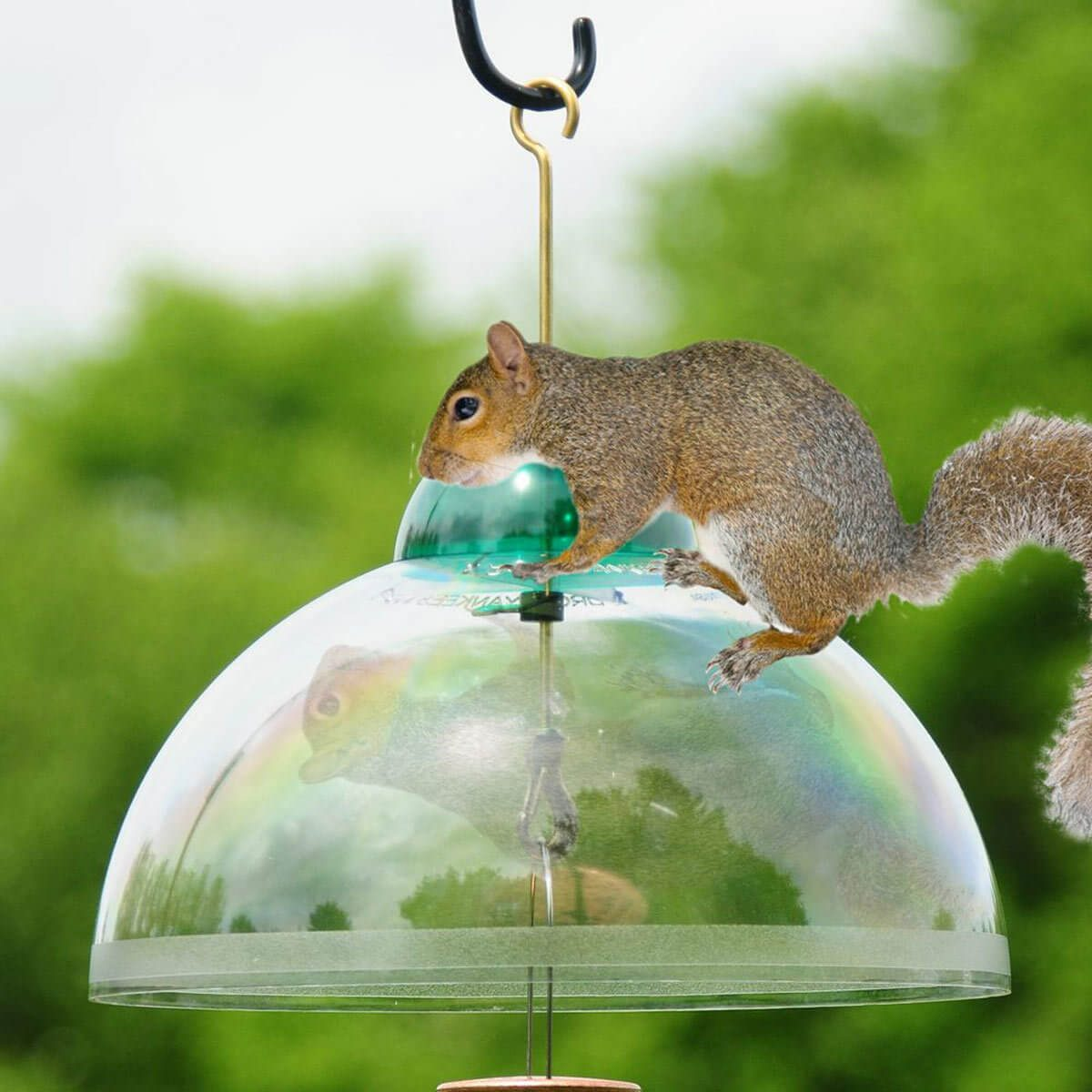 How To Safely Deter Animals That Steal From Your Garden