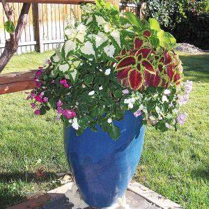 Flower Recipes for Mini Gardens