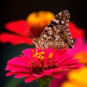 9 Butterfly Flowers to Grow From Seed