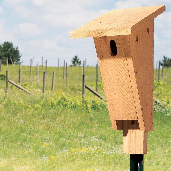 bluebird house birdhouse