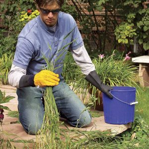 The Ultimate Guide to a Weed-Free Landscape